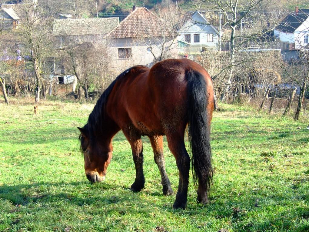 Chance - Azil za konje