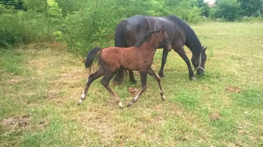 Gwen - Azil za konje