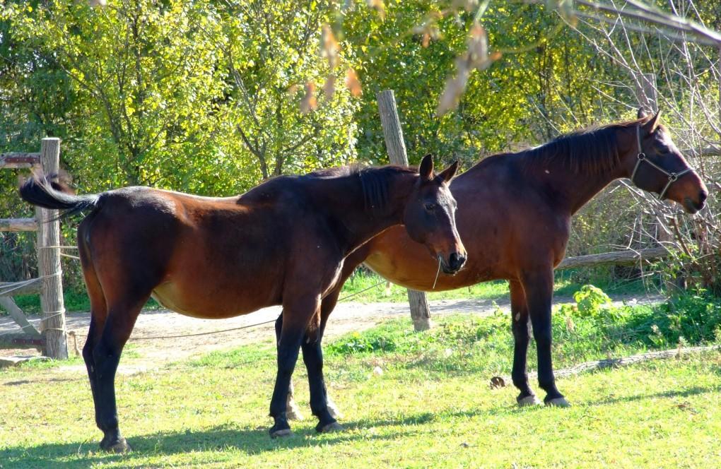 Nonijus kobile - Azil za konje