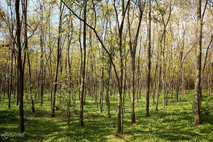 Svetski dan šuma