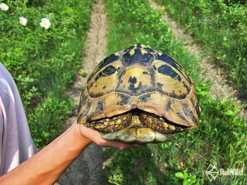 Svetski dan kornjača