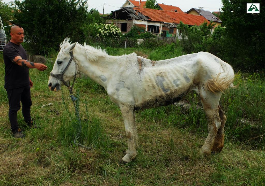 Kobila povređena sekirom