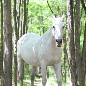 My Ridle – bela kobila iz bajke